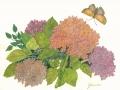 joannes-hydrangea