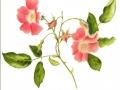ninas-rose