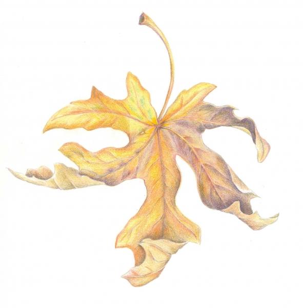 Dancing Leaf