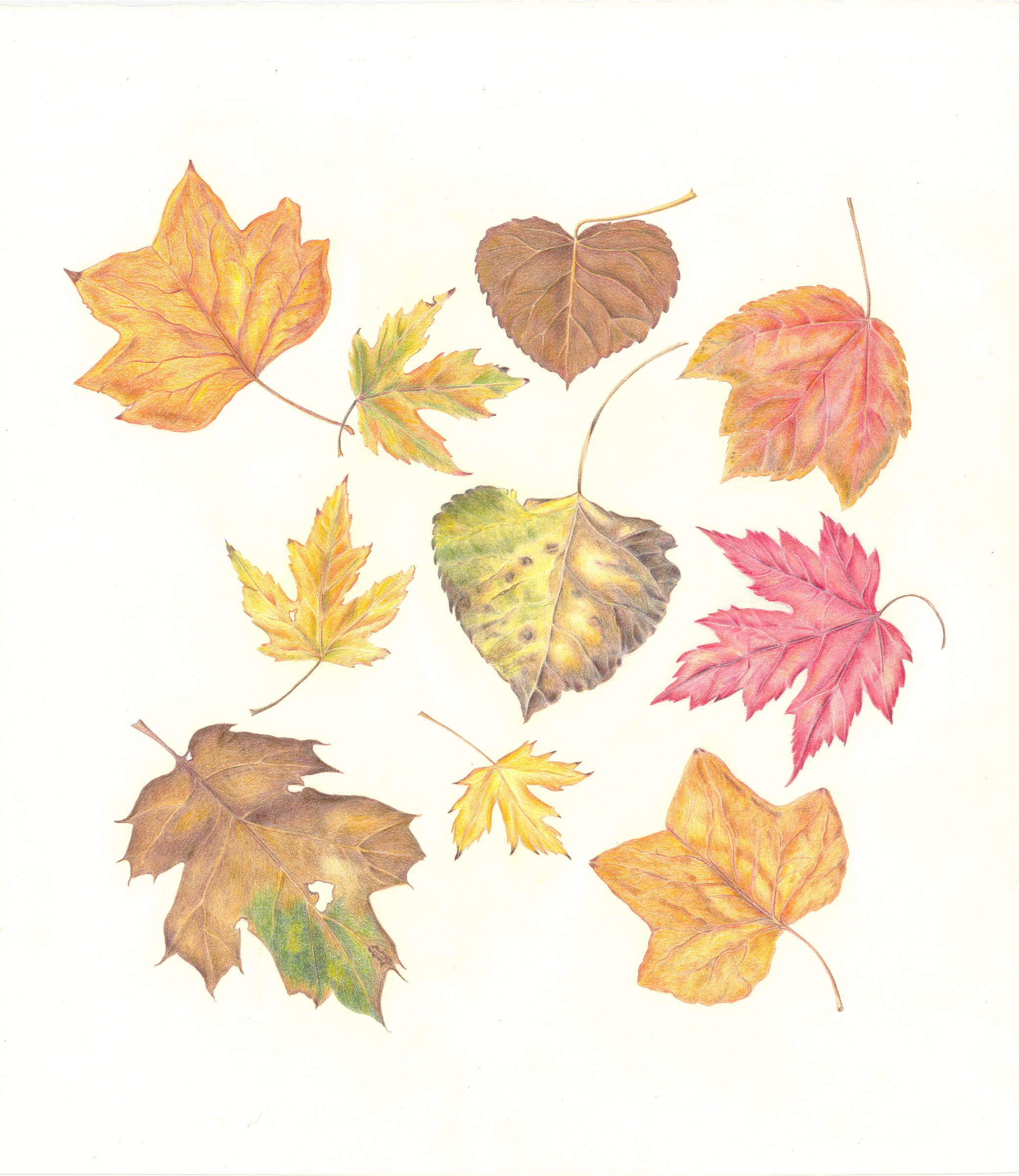 autumn-leaves