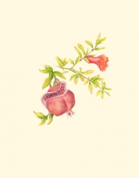 Antze-Pomegranate
