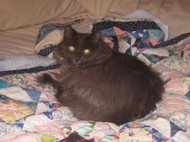 Samson on Quilt