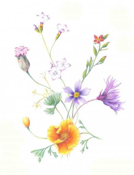 Pepperwood-wildflowers